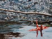 """""""Crane #11 (Rocky Mountain Creek)"""", 16""""x12"""", Oil on Linen, Thinkspace Gallery, Dreams of Flight, SOLD"""