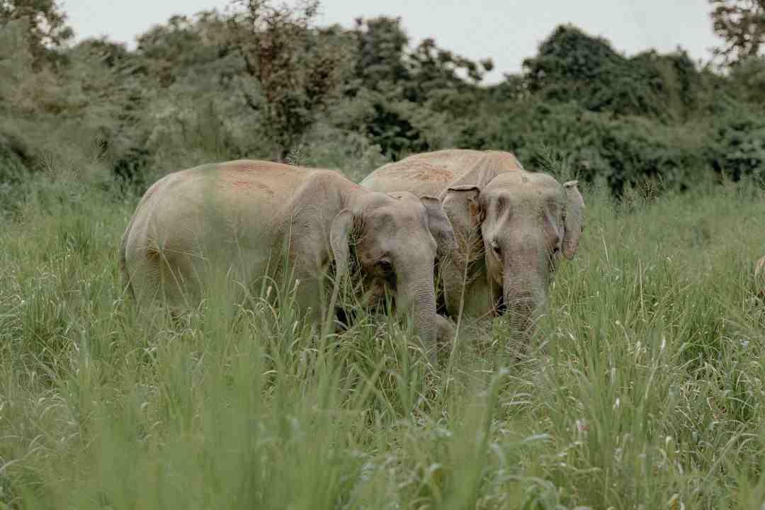 Animal-friends-elephants