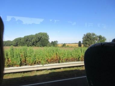 Window on the bus ride to Hedersleben