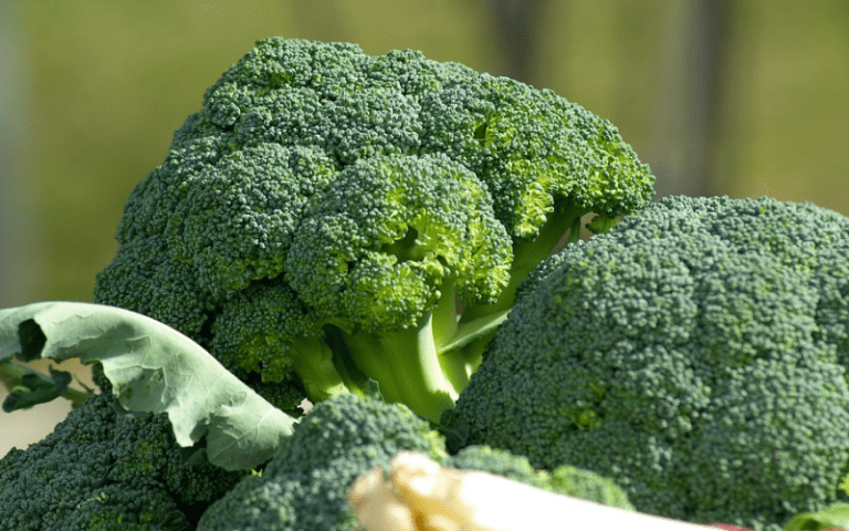 Calories are not all the same. The calories in broccoli promote health while the calories in soda damage your health.