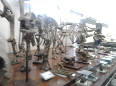 Museum Geologi 5