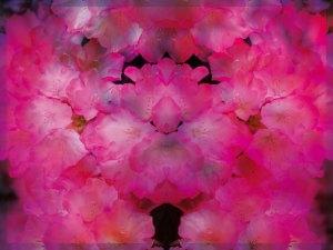 Blütenrausch rot