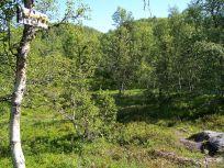 Engjasete-Hellesetberget-019