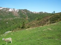 Tuftahaug via Fadnastølen 049