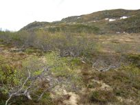 Bergsete opp Kvannaskard-043