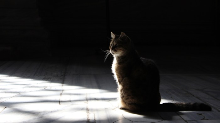 A cat sitting with light coming from the window and shadows in the background in Hagia Sofia.