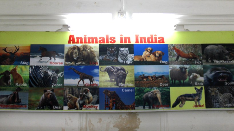 """A poster of the """"Animals of India"""" that mistakenly includes zebras and giraffes among other animals. Located in the science museum of Saheliyon-ki-Bari garden."""