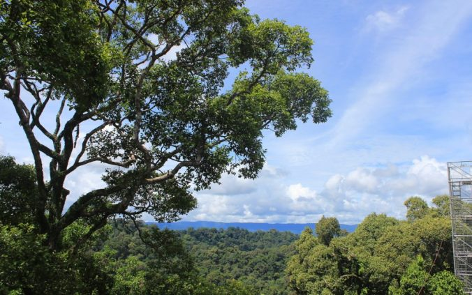 The rainforest continues across the border of Brunei and Malaysia.