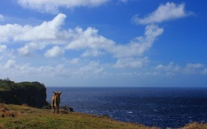 A dog on a cliff at the Pacific Ocean coast.