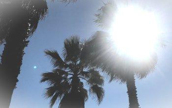 beach palm trees santa monica pier santamonica baywatch a river of roses ariverofroses la los angeles