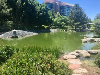 Pond in the Japanese Stroll Garden: taken by Alayna O'Keefe