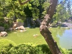 Waterfall in the Japanese Stroll Garden: taken by Alayna O'Keefe