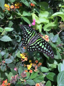A butterfly enjoying the green leaves of the garden: take by Francesca Palmisano