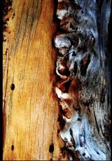 Carly Strauss | Pine