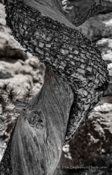 Don Lawrence | Chiricahua National Monument