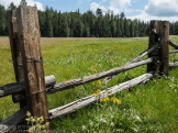 Focus On Nature Photography | Hannagan Meadow