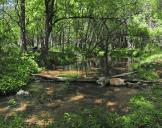 Jody M. Tanner | Verde River