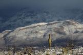 Mike Sparky P | Saguaro NP