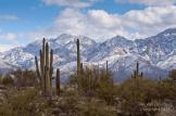 Tim Van Den Berg | Catalina Mountains