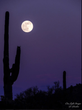 Gerry Groeber | Tonto National Forest