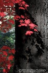 John Morey Photography | Natural Fine Art Photographics & More | Horton Creek
