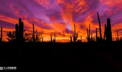 Sean Parker Photography | Tucson