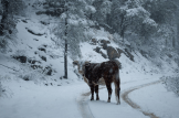 Jenn Walker | Pinal Mountains