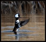 Whispering Dove | Boyce Thompson Arboretum