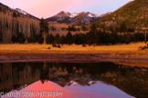Hayley Susan | Lockett Meadow