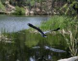 Steve Schieman | Lynx Lake
