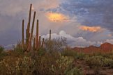 Heavenly Images by Debbie Angel‎ | Saguaro NP West