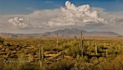 Brooks Crandell | Four Peaks