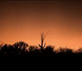 Patrick Cobb   Saguaro NP