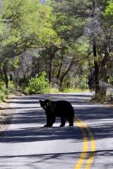 Chad Harris | Chiricahua National Monument