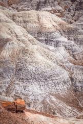 Valerie Millett | Petrified Forest National Park