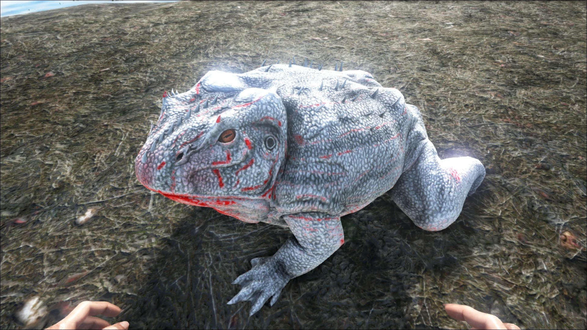 Beelzebufo Official ARK Survival Evolved Wiki