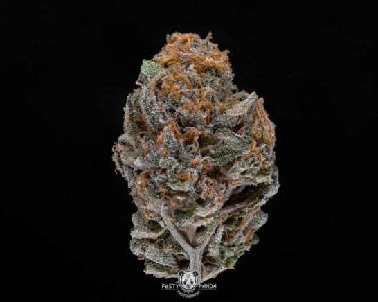 Strain Reviews: Star Killer by Osage Creek Cultivation