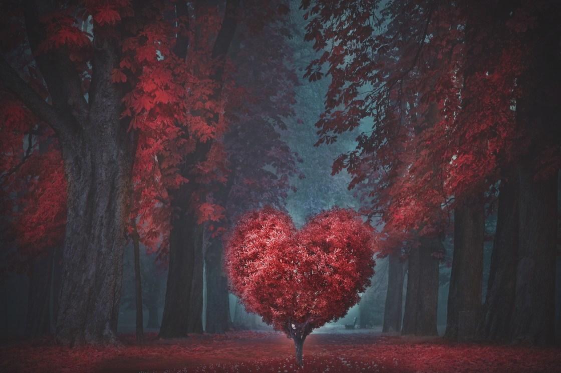 Valentine Heart Forest