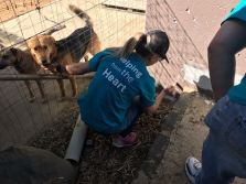 FNB outreach to Ark Animal Puppy Shelter 006