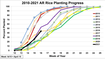 Rice planting progress