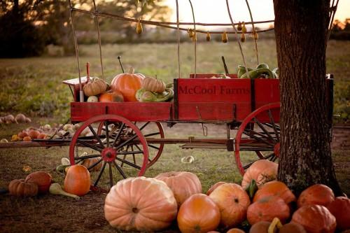 mccool pumpkin patch