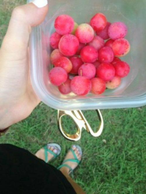 paige wolven cherries edit