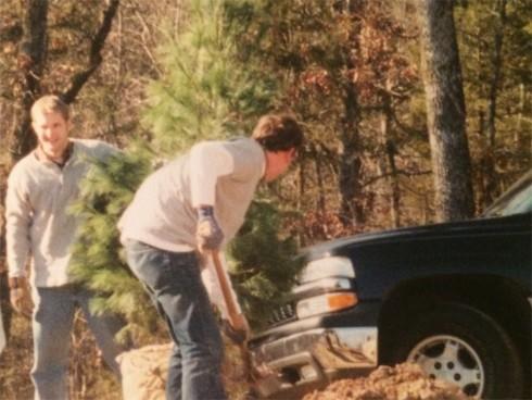 White Pine Planting