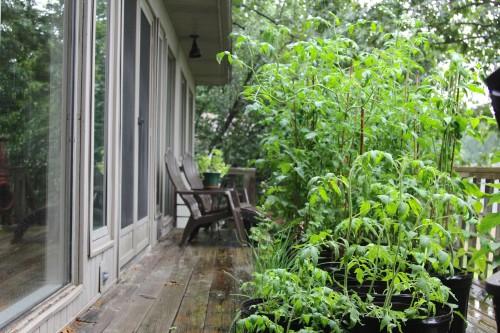 crazy garden lyndi fultz