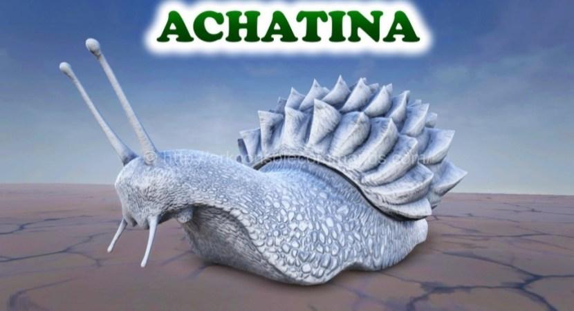 ark-achatina