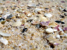 Merimbula Beach (sand and shells)