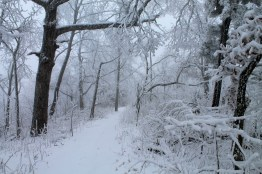 Mt. Magazine: Benefield E. Loop Trail Snow Photos, Pt. 1 photo