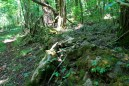 River View/Rock Wall Trails Loop (Buffalo River) - 4 mi photo
