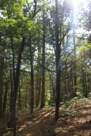 Redding Loop/Spy Rock Trail (Ozark Forest) – 8 mi photo