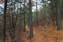 Ouachita Trail 01: Pics of FR 6010 to Deadman's Gap TH (5.8 – 8.0) photo